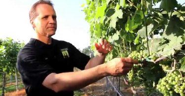 Monroeville Vineyard & Winery